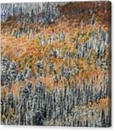 Painted In Orange Canvas Print