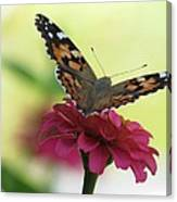 Painted Lady Butterfly On Zinnia Canvas Print