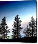 Painted Pine Tree Trio Canvas Print