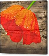 Painted Poppy On Wood Canvas Print