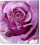 Painted Purple Rose  Canvas Print