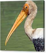 Painted Stork Mycteria Leucocephala Canvas Print