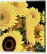 Painted Sunflowers Canvas Print
