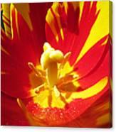 Painted Tulip Canvas Print
