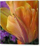 Painted Tulip Canvas Print