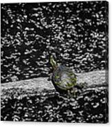 Painted Turtle In A Monochrome World Canvas Print