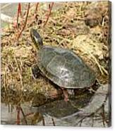 Painted Turtle Reflected In Water Canvas Print