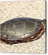 Painted Turtle Canvas Print