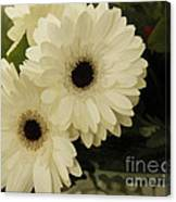 Painted White Flowers Canvas Print