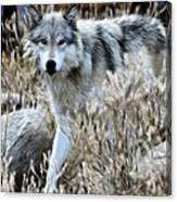 Painted Wolf Canvas Print