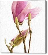 Painterly Pink Magnolia Canvas Print