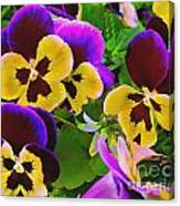 Painterly Purple Pansy Canvas Print