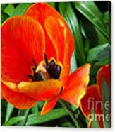 Painterly Red Tulips Canvas Print