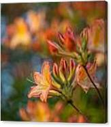 Painterly Rhodies Canvas Print