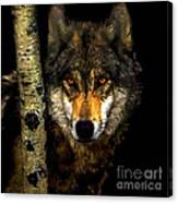 Painting ... Wolf In Aspen Grove Canvas Print