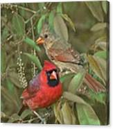 Pair Of Cardinals Canvas Print
