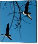 Pair Of Geese Canvas Print