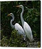 Pair Of Herons Canvas Print