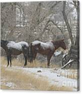 Pair Of Horses In A Snow Storm   #0559 Canvas Print