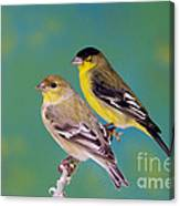 Pair Of Lesser Goldfinches Canvas Print