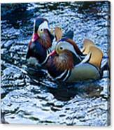 Pair Of Male Mandarin Duck-signed-#8236 Canvas Print