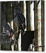 Pair Of Owls Canvas Print