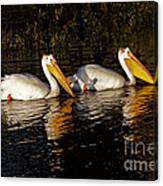 Pair Of Pelicans   #6935 Canvas Print