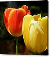 Pair Of Red And Yellow Tulips Canvas Print