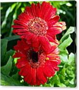 Pair Of Red Gerber Daisy Flowers With Ladybug Canvas Print