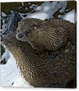 Pair Of River Otters   #1266 Canvas Print