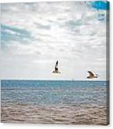 Pair Of Seagulls Canvas Print