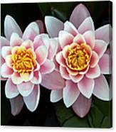 Pair Of Water Lilys Canvas Print