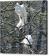 Paired Egrets At Lake Martin Louisiana Canvas Print