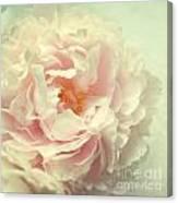 Pale Beauty Canvas Print