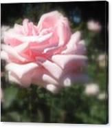 Pale Pink Rose I Canvas Print