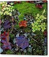 Palette Of Colour Canvas Print