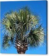 Palm Against Blue Sky Canvas Print