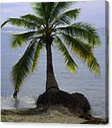 Palm At The Edge Of The Sea Number Two Canvas Print