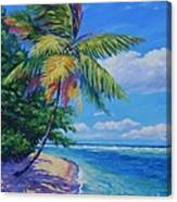 Palm At The Water's Edge Canvas Print