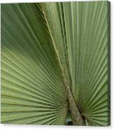 Palm, Belize Botanic Garden Canvas Print