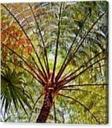 Palm Canopy Canvas Print