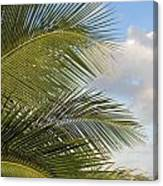 Palm Close Up 3 Canvas Print