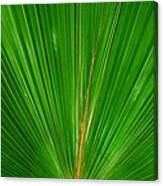 Palm Closeup Canvas Print