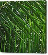 Palm Crosshatch Canvas Print