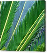 Palm Cycas Fronds Canvas Print