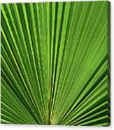 Palm Fan Design Canvas Print