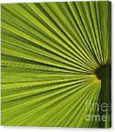 Palm Fron Abstract Canvas Print
