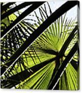 La Palm 3  Canvas Print