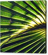 Palm Frond Canvas Print
