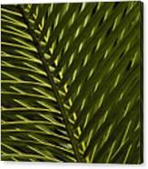 Palm Frond Patterns Canvas Print